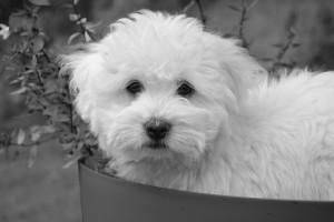 dog-2649451_1920